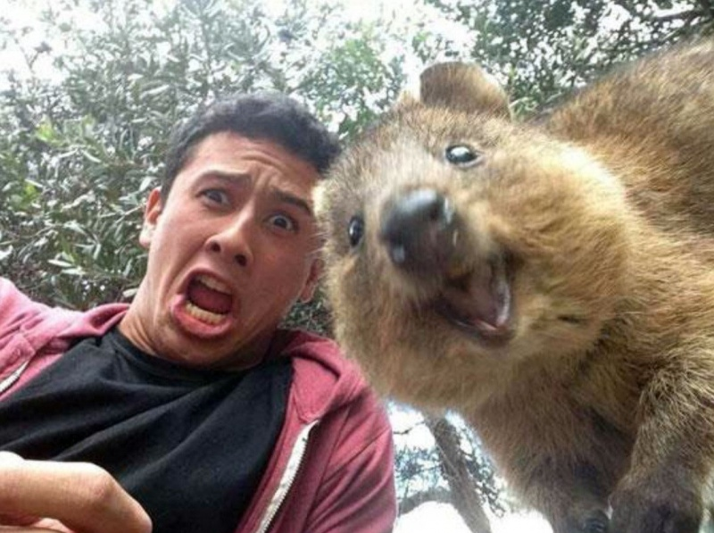 Quokka-15 Super Cool Animals That You May Find Only In Australia