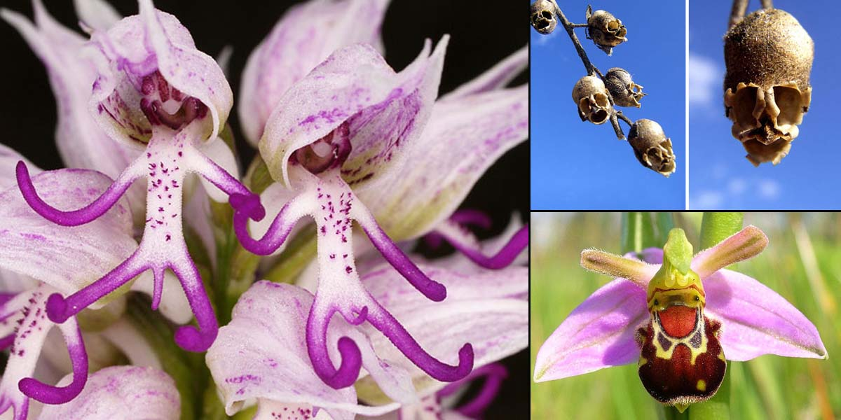 15 Awesome Flowers that Don't Look Like Flowers at All