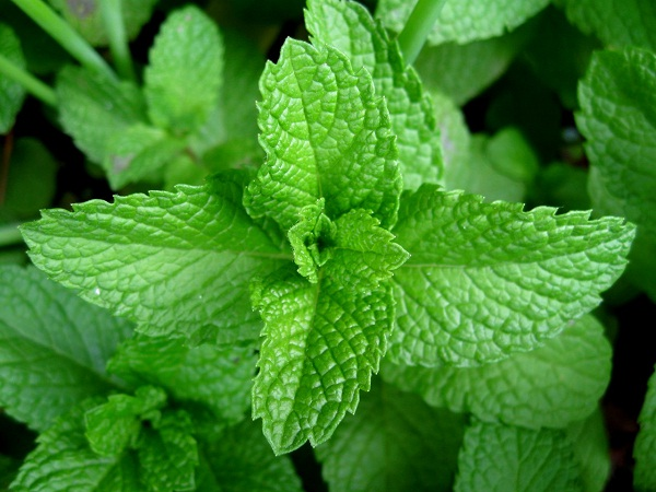 Mint-Simple Home Remedies For Pimples