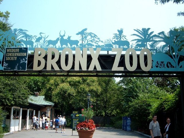Bronx Zoo-Best Places To Visit In New York