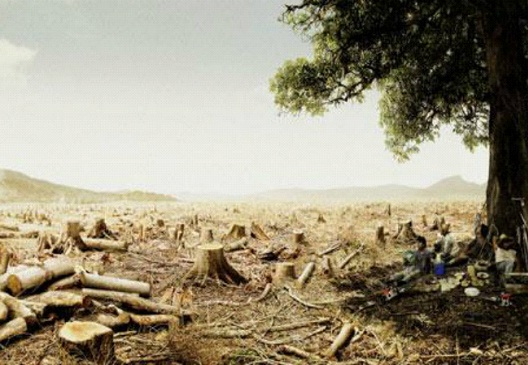 Lone Tree Survivor-24 Creative WWF Ads