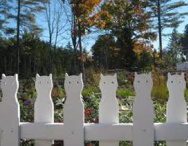 Miss Kitty Here, There and Everywhere-Hilarious Fence Fails