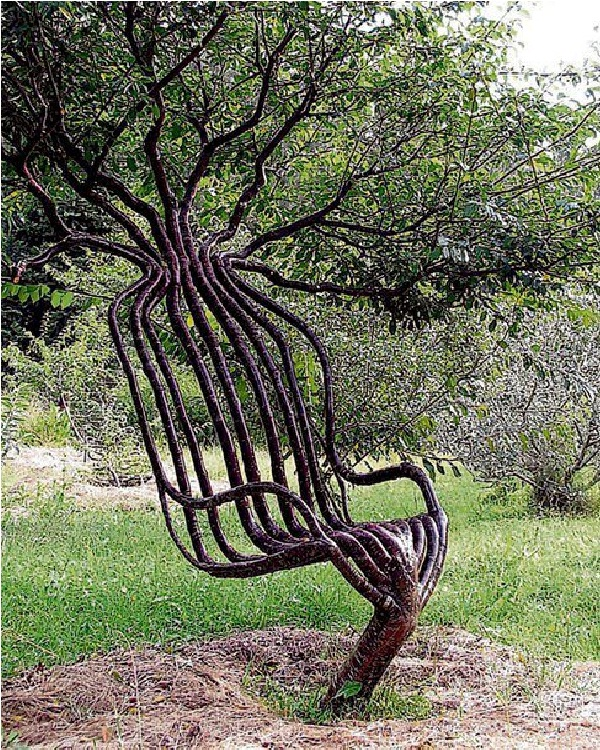 Chair Tree-Amazing Trees