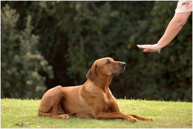 Down-Essential Dog Training Tips