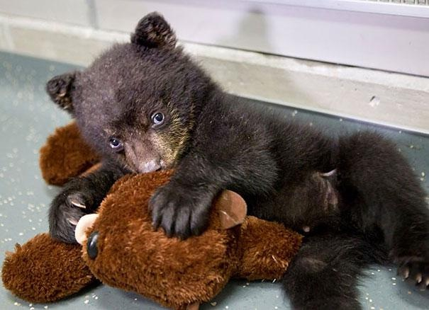 It belongs to the bear-Baby Animals With Stuffed Toys