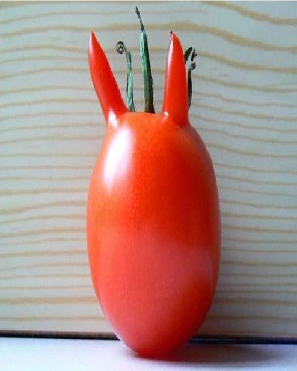 Devil Tomato-Top 15 Weirdest Shaped Fruits/vegetables