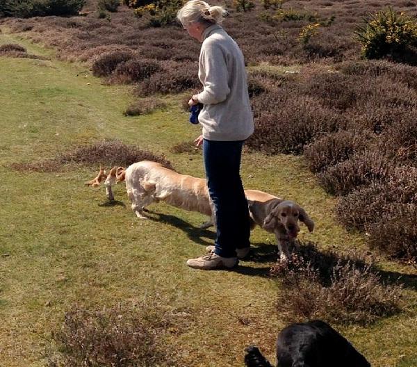 Extra Long Dog-Panoramic Photos That Went Horribly Wrong