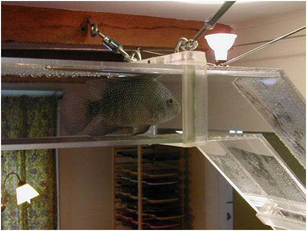 Pipeline Fish Tank-Pet Friendly Furniture Ideas