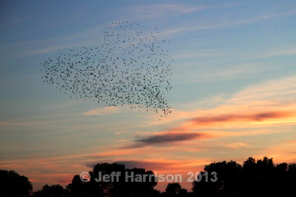 Heart-Most Amazing Bird Formations In Sky