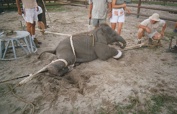 Bad Training Methods-Facts About Circuses