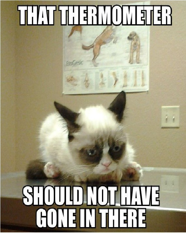 Thermometer-Funniest Cat Memes Of All Time