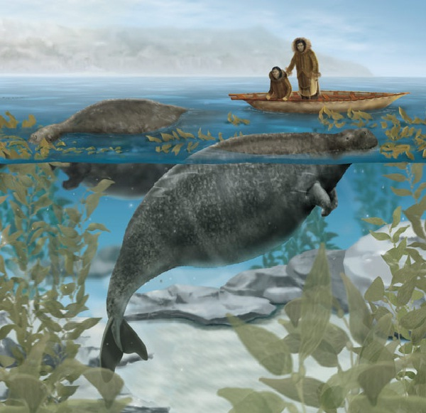 Steller's Sea Cow-Extinct Animals That Science Could Bring Back From The Dead