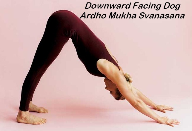 Down dog-Simple Yoga Poses To Lose Weight
