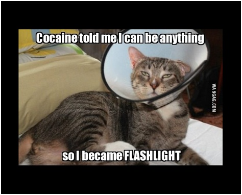 Cat Flashlight-Best 'They Said I Could Be Anything.' Memes