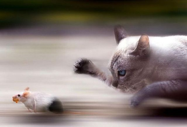 Tom and Jerry-Amazing Perfectly Timed Photos Of Animals