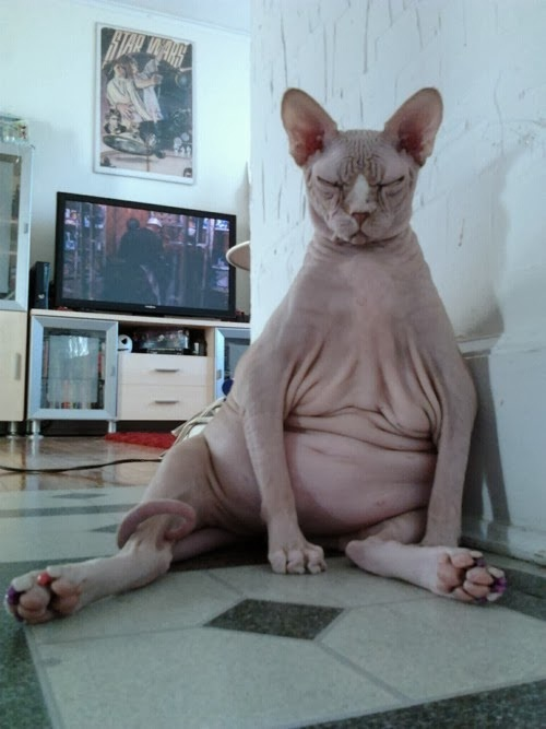 Fat And Ugly-Ugliest Cats Ever