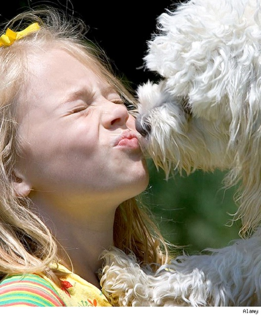 Kiss-Cool Things You Can Teach Your Dog Easily