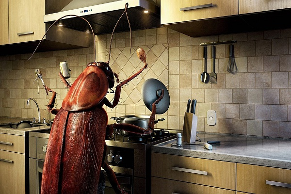 Kitchen Bugs-Pictures That Will Make You Crazy If You Have OCD