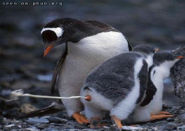 The Physics Of Penguin Poop-Most Bizarre Scientific Papers