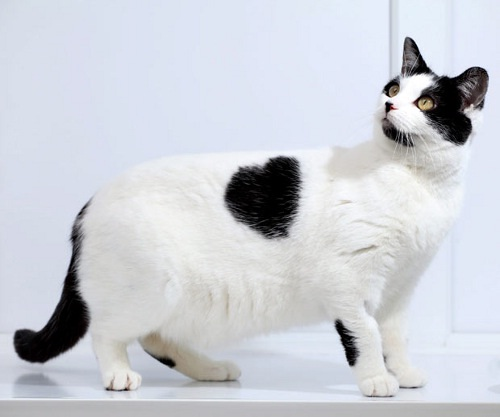 The cat loves you-Bizarre Birthmarks Ever