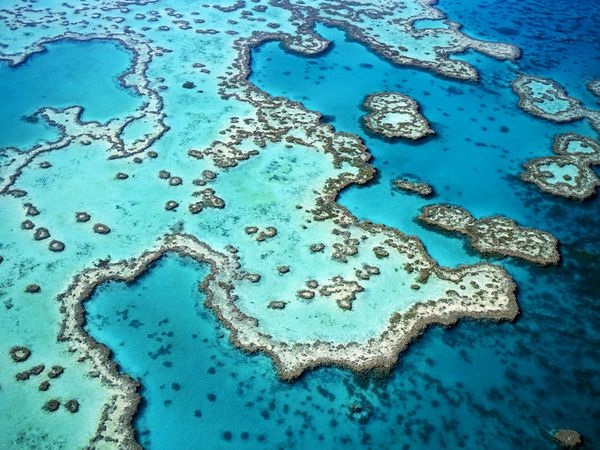 Great Barrier Reef-Crazy Science Facts You Never Knew