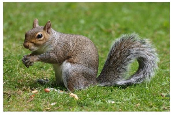 Squirrel-Weird Facts About Animals