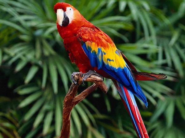 Parrot-Best Animals For Pets