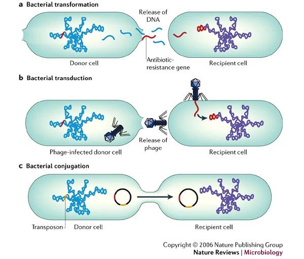 Antibiotic Resistant Bacteria-Freaky Scientific Discoveries