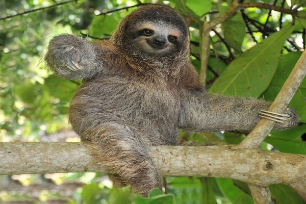 Sloth-Funny Looking Animals
