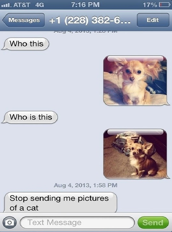 A cat????-Funny Ways To Respond To A Wrong Number Text