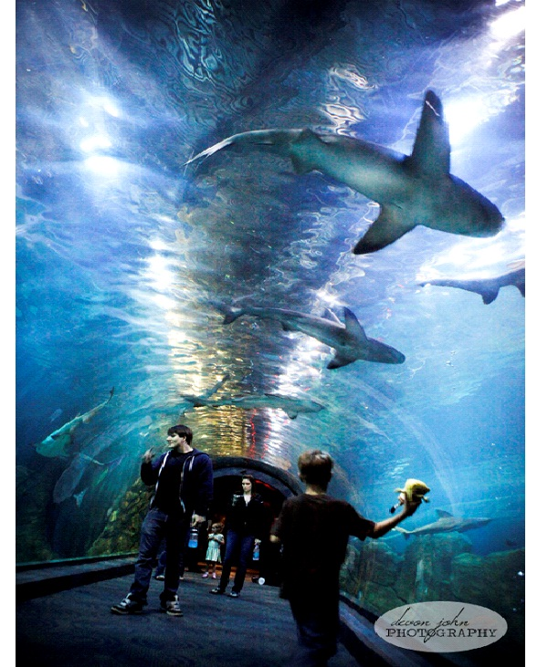 Adventure Aquarium Places To Visit In New Jersey