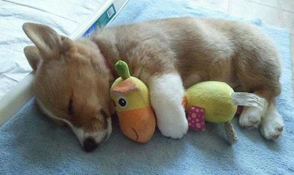 Puppy with a strange animal-Baby Animals With Stuffed Toys