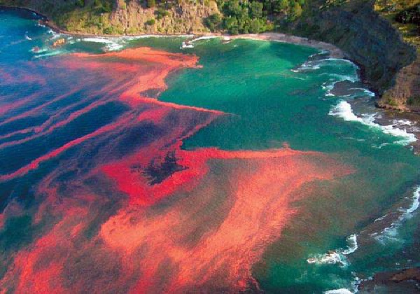 Red Tides-Ridiculously Cool Natural Phenomena