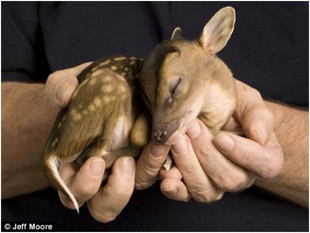 Baby Deer-Cutest Animals Ever