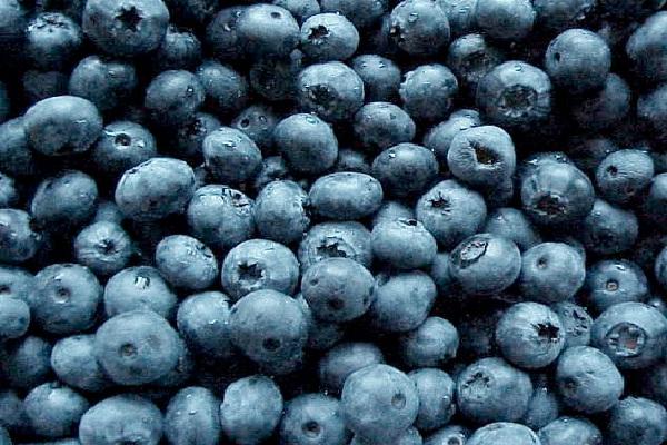 Blueberries-Foods That Help Building Blood