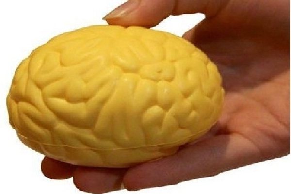 The brain-Coolest Stress Balls