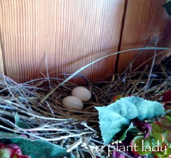 On A Wreath On Front Door-Most Unusual Places For A Bird's Nest