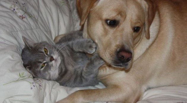 Hey!-Amazing Pics Of Animals Pillowing Each Other