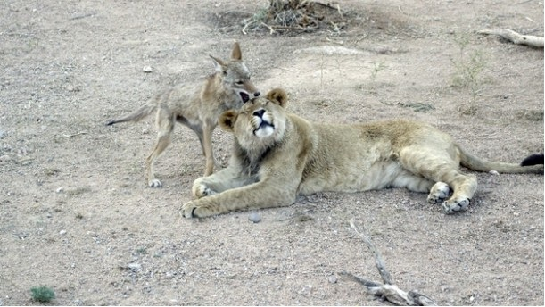 Oh Yes You Found That Itch!!-Wonderful Friendship Between Animals
