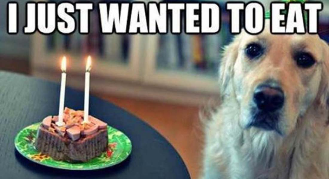 12 Funny Dog Memes That Will Make You Lol