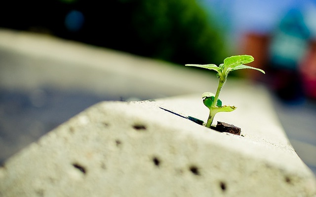 Resilient-Qualities An Employee Should Have