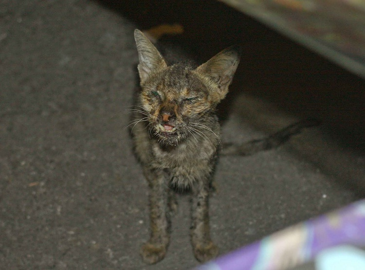 This Has To Be A Stray-Ugliest Cats Ever