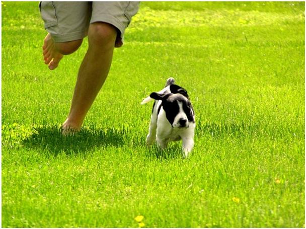 Okay-Essential Dog Training Tips