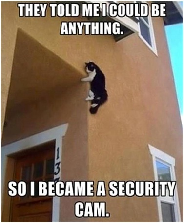 Cat Security-Best 'They Said I Could Be Anything.' Memes