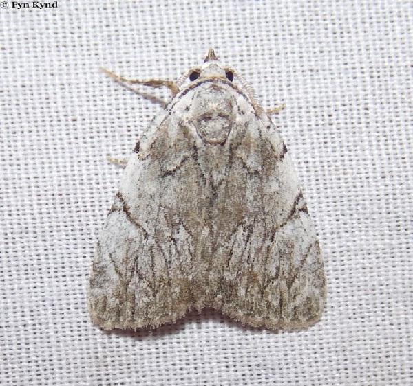 Dominickus-Bizarre Prehistoric Bugs