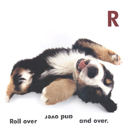 Roll Over-Cool Things You Can Teach Your Dog Easily