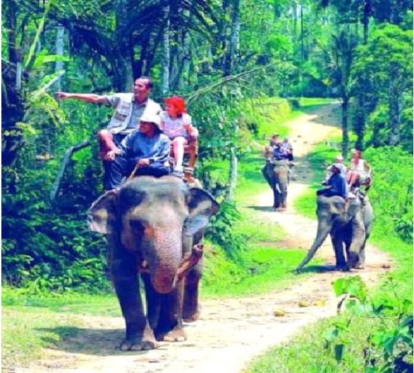 Go On Safari-Best Bucket List Ideas