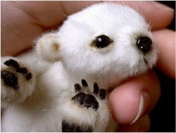 Baby Polar Bear-Cutest Animals Ever