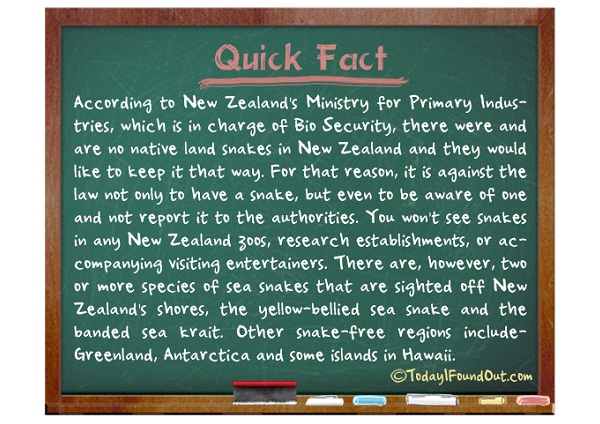 No Snakes-Cool Facts About New Zealand