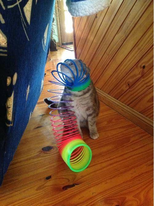 Caught In A Slinky-Funny Animals Stuck In Objects